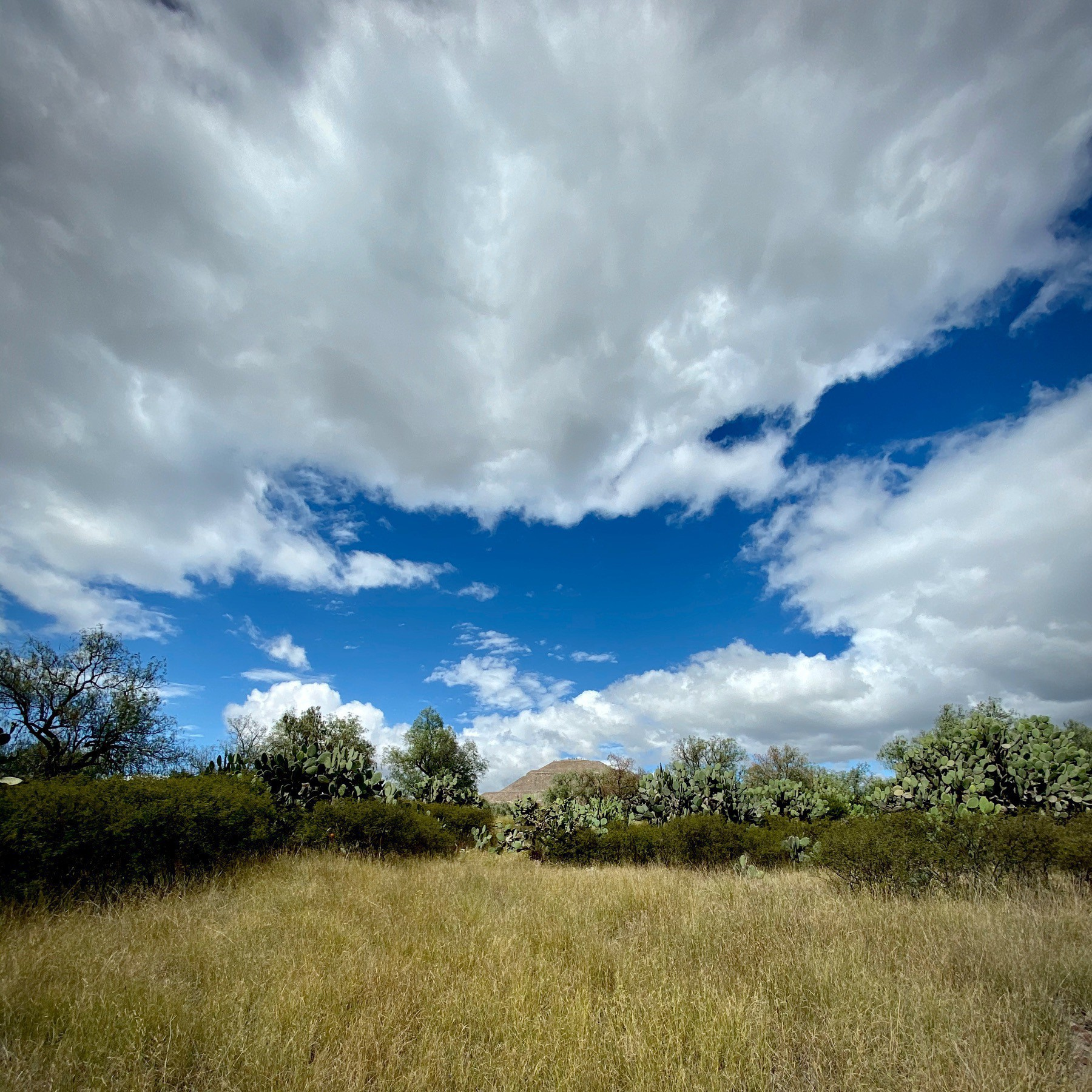 Beautiful clouded sky and meadow in Mexico.