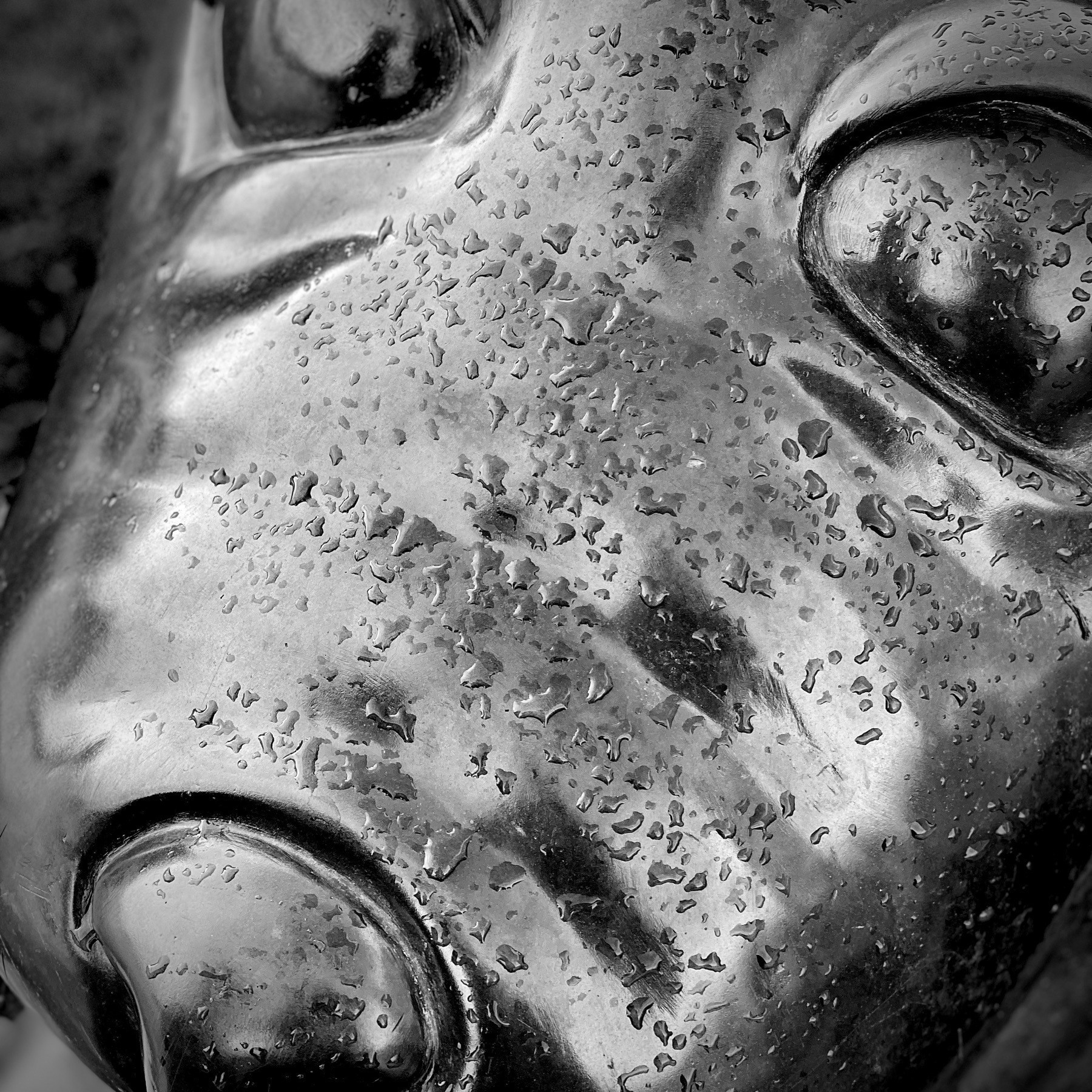 Face of a seal statue in Belfast.