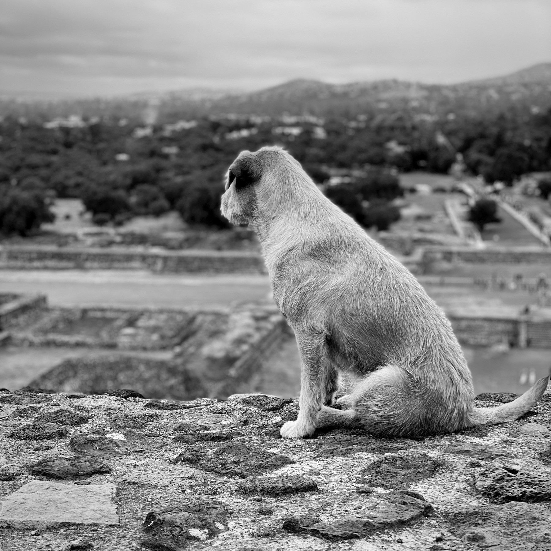 Dog looking out over the valley from the top of a pyramid in Mexico City.
