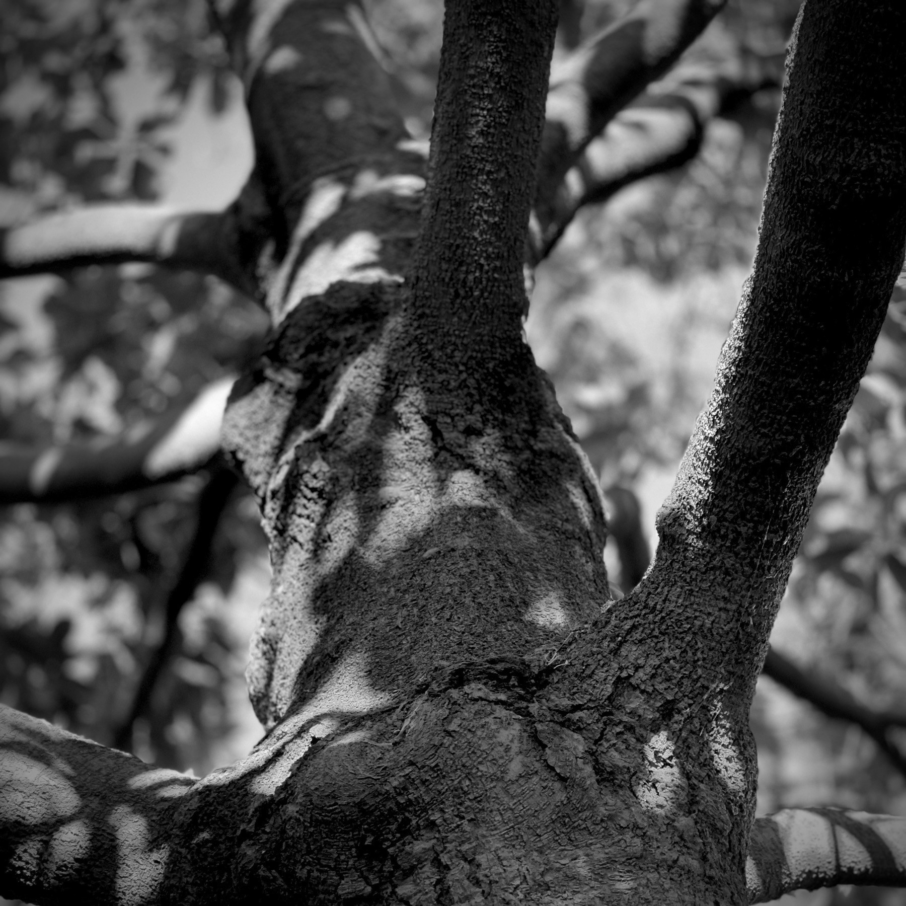 Black and white view looking up at a tree.