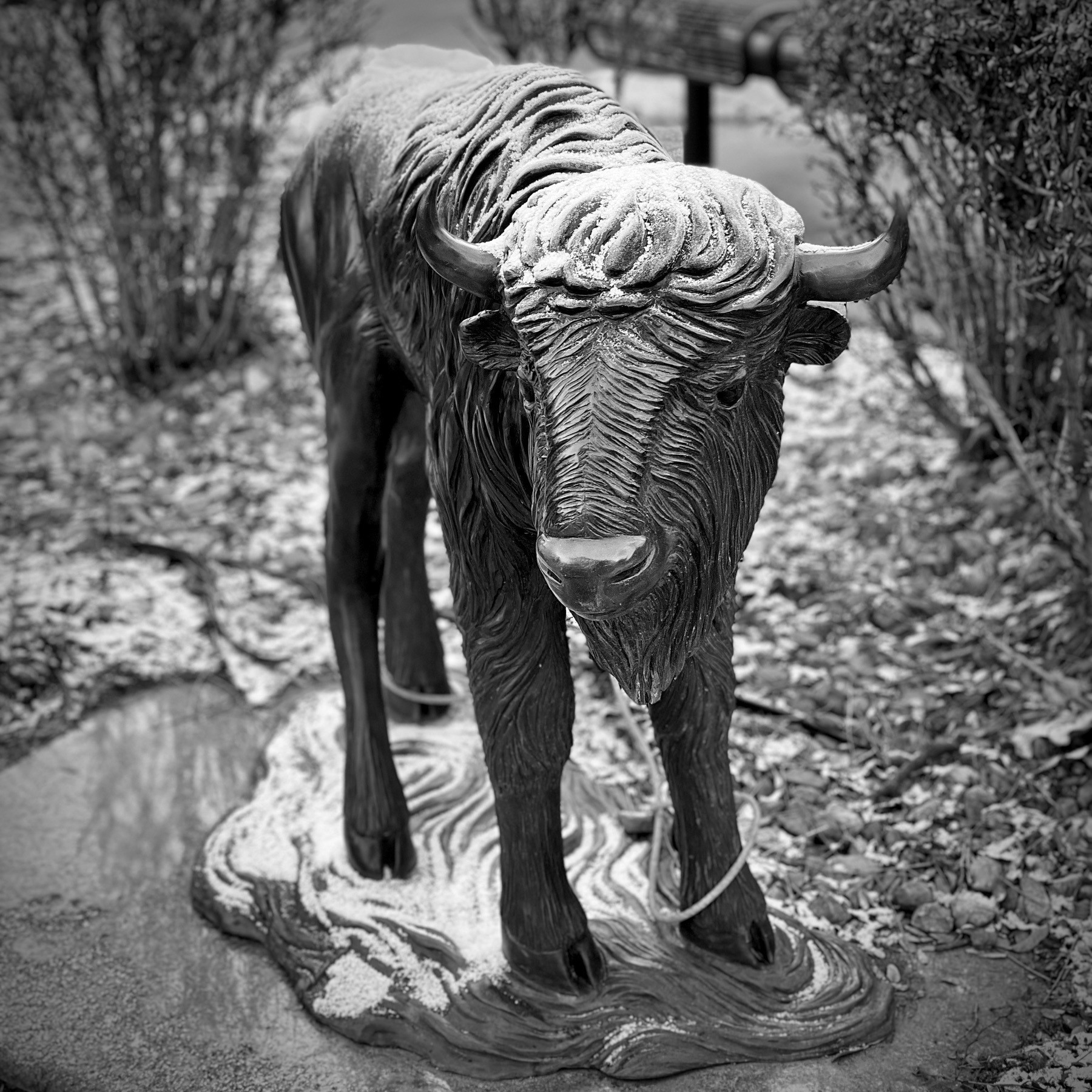 Small metal statue of a baby buffalo, with a light dusting of snow.