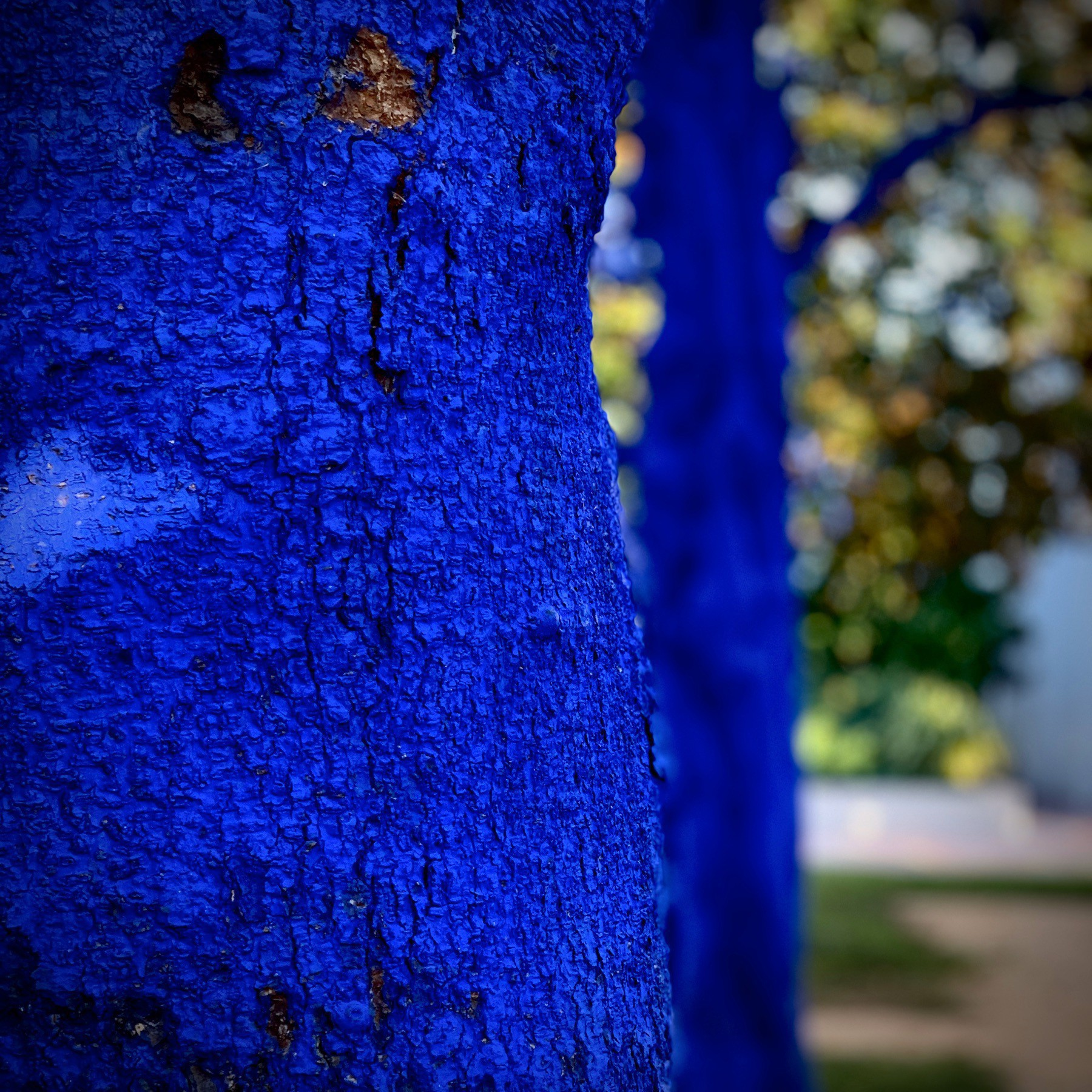 Closeup of sick tree painted blue with medicine.