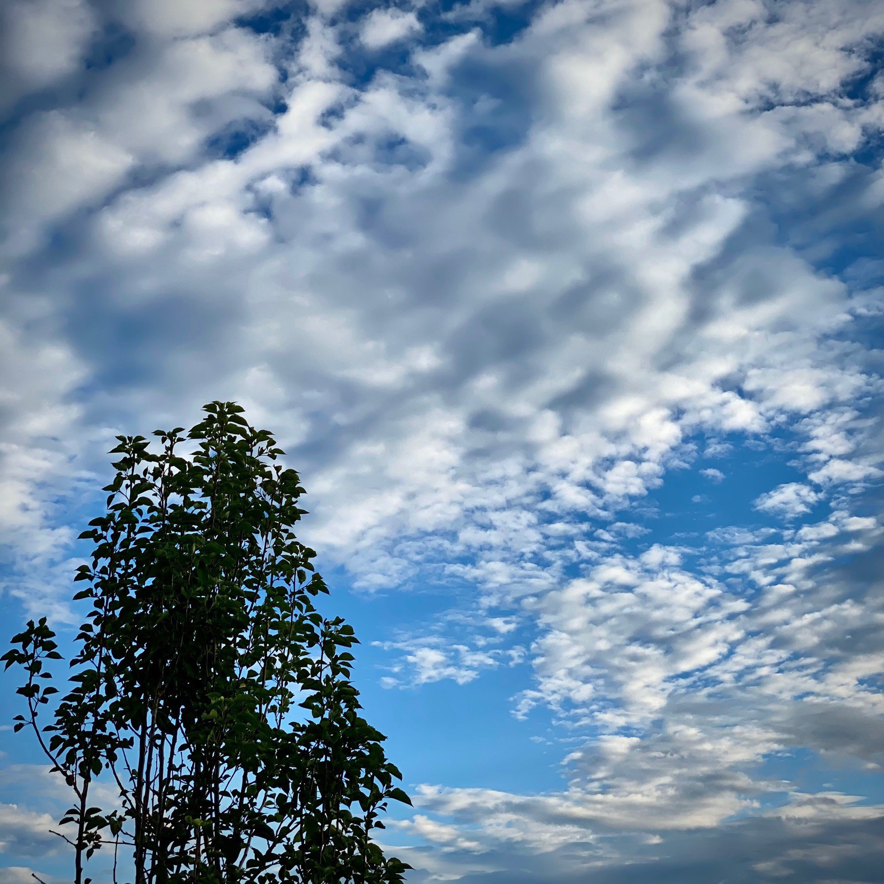 Young tree against a clouded but blue sky.