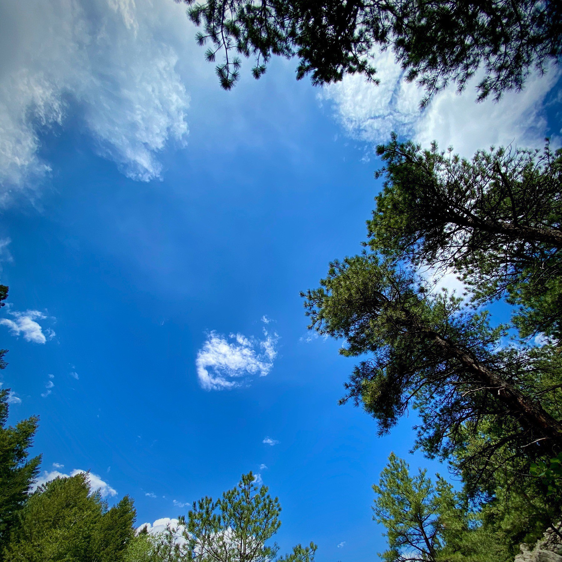 Looking up at a blue sky, framed by trees.