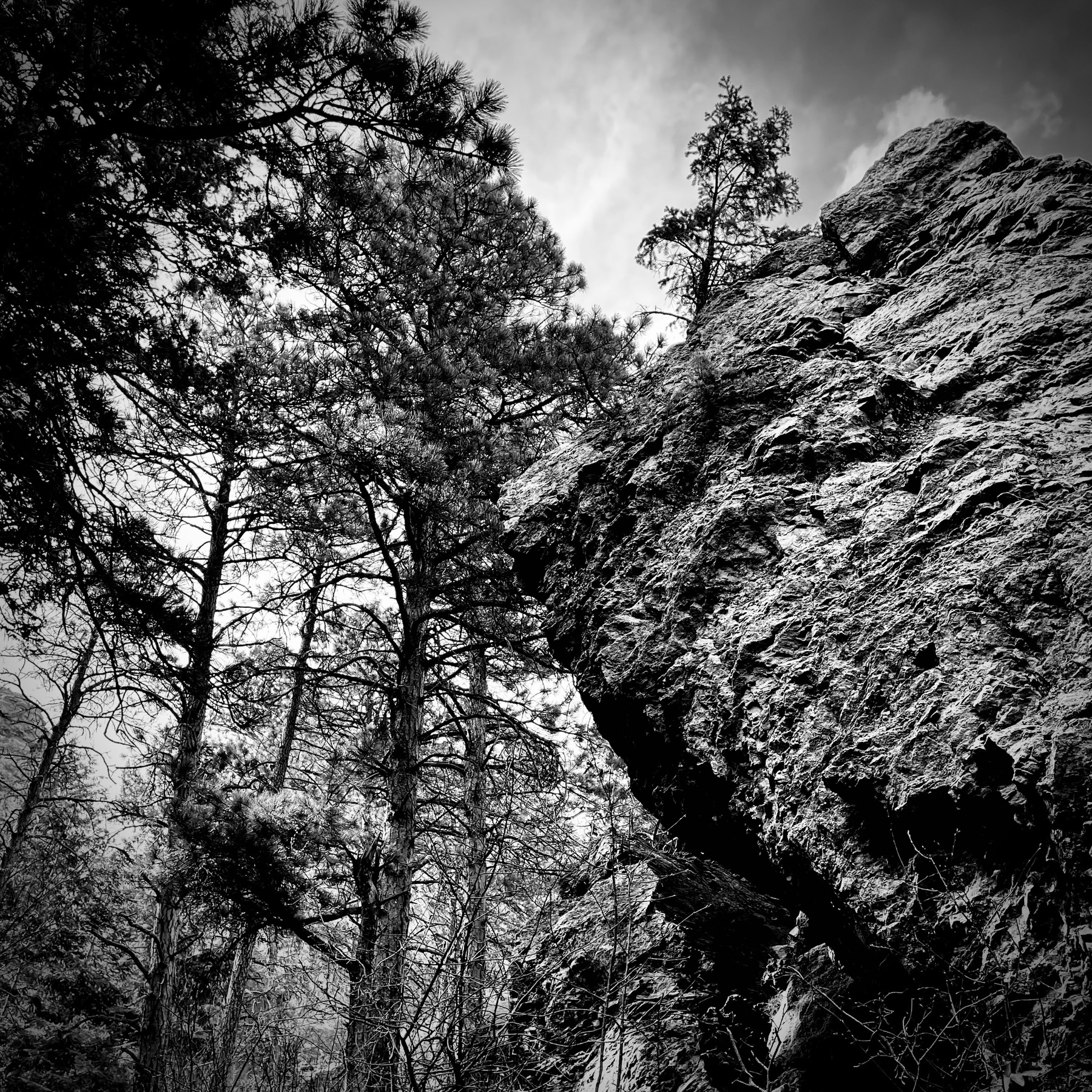 Rock face and pine trees against a Colorado afternoon sky.