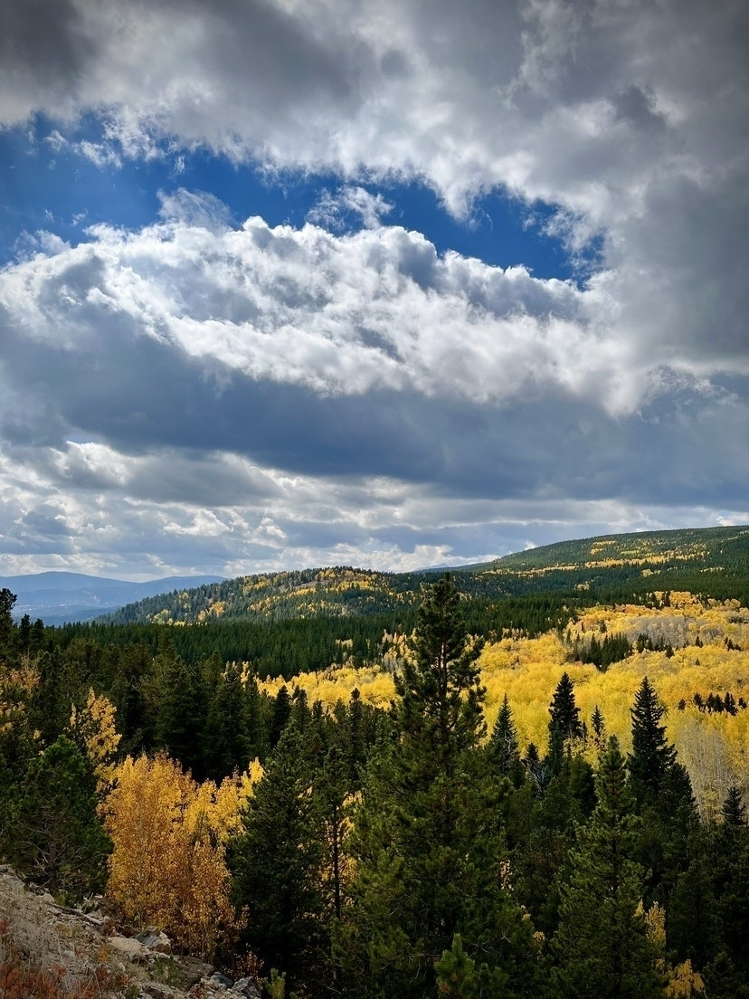 Aspens in fall colors over rolling hills.
